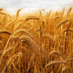 Allergenic Proteins - Wheat (PRW)