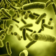 Bacteria - Pathogenic 30 (BAC)