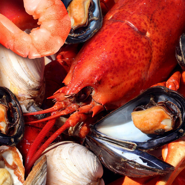 Food - Shellfish
