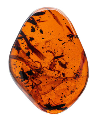 What is Amber? Information From the Gemological Institute of America