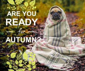Are You Ready for Autumn?