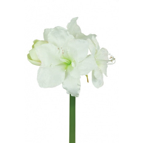 Artificial Amaryllis Stem, White/Cream, 75cm