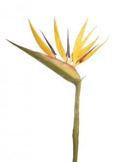 Artificial Bird of Paradise Stem (83cm)