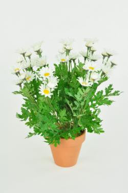 Artificial Daisy Bush, 33cm, Potted