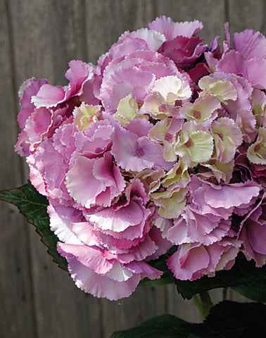 Artificial Hydrangea Stem, Rich Pink