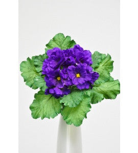 Artificial African Violet Plant, Purple