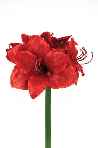 Artificial Amaryllis Stem, Red, 75cm