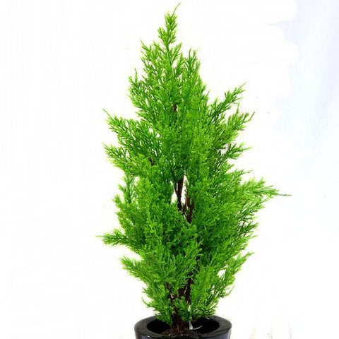 Artificial Cedar Tree, 45cm