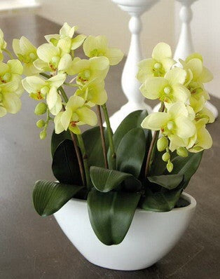 Artificial Orchid, Potted, Shaped Vase, Green