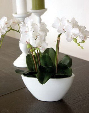 Artificial Orchid, Potted, Shaped Vase, White