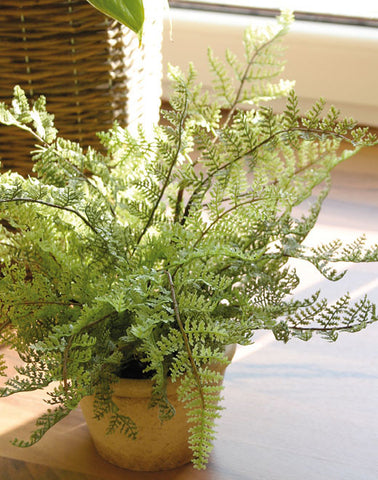 Artificial Fern, Potted