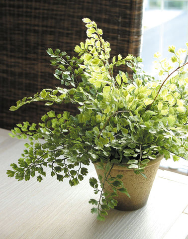 Artificial Maidenhair Fern, Potted