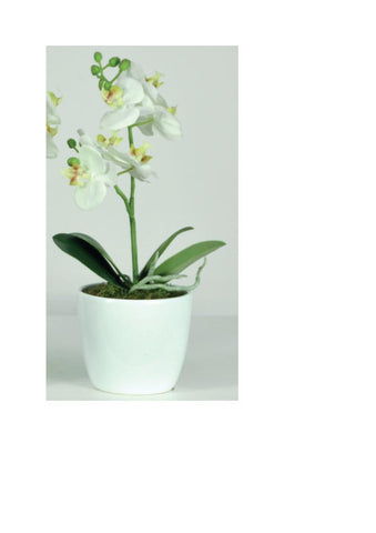 Artificial Orchid, Potted, Short Stem