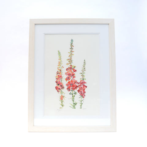 Picture of Foxgloves