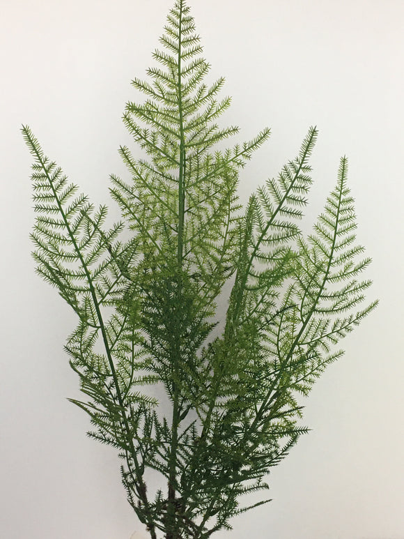 "Asparagus fern spray 5 stem 33""H SB9006"