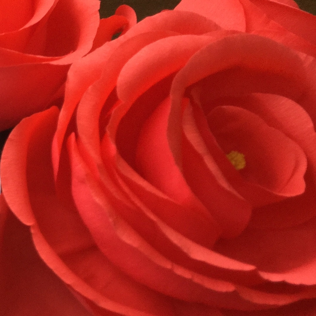 Giant Crepe Paper Rose