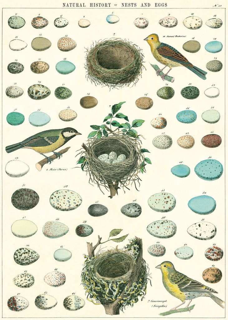 Nest, Eggs & Birds - Cavallini Wrap & Poster