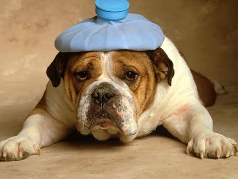 The Hidden Signs of Pain in Dogs