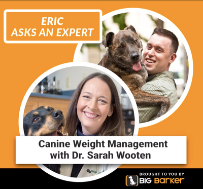 Does a Little Extra Weight Put Your Dog at Risk?