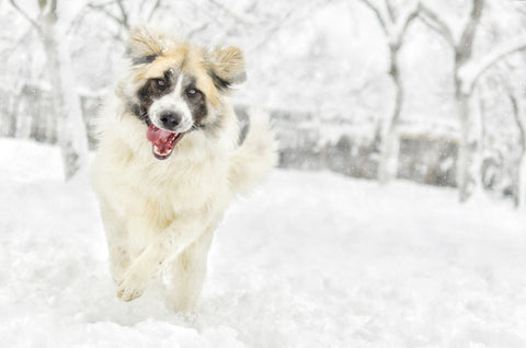 Joint Care For Your Big Dog In The Cold Winter Months