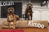 Unboxing An XL Big Barker For Lolah & Kimbo
