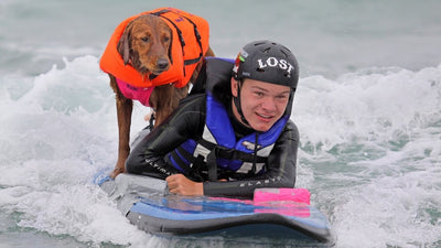 Ricochet the Surfing Dog Helps Surfers with Disabilities to Keep on Riding