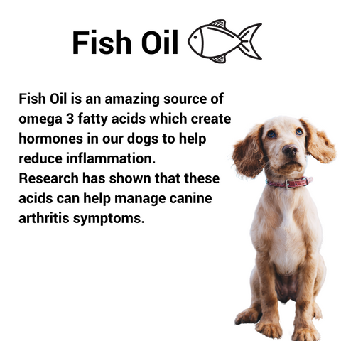 Fish oil is an anti inflammatory food to give your pet.