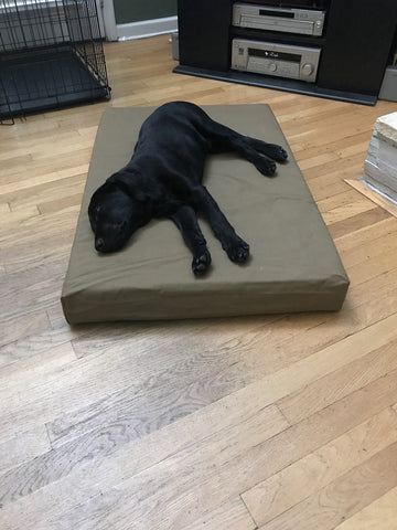 Labrador puppy laying on Big Barker bed