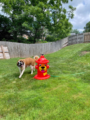 """""""Cooling off on a hot day with my giant sprinkler perfect for big guys like me!"""""""