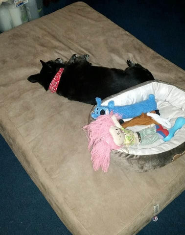 funny puppy asleep on Big Barker bed