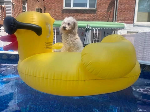 dog on a float