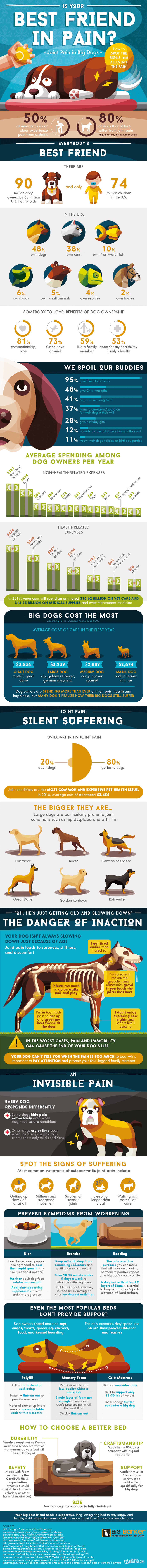 joint pain in big dogs infographic