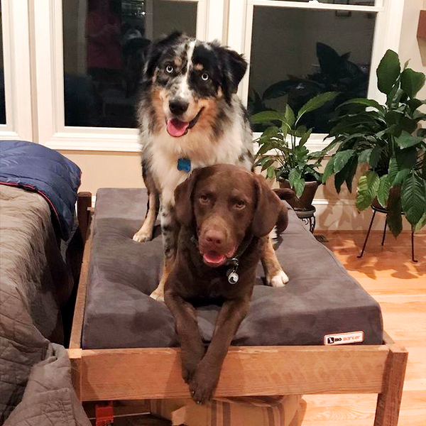Two Dogs on a Big Barker Bed with a Bed Frame