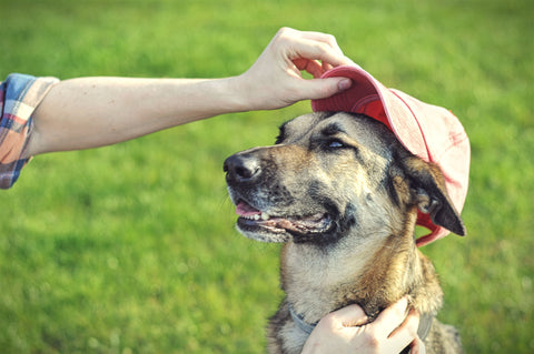 Dog with a Baseball Hat