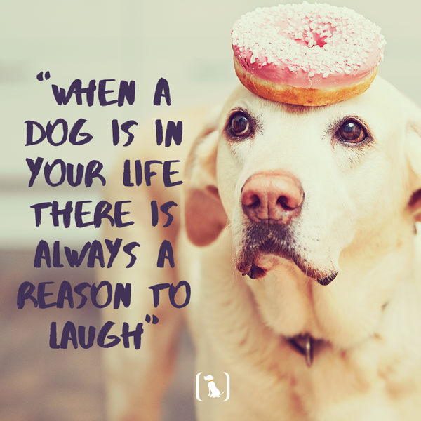 """""""When a dog is in your life there is always a reason to laugh"""""""