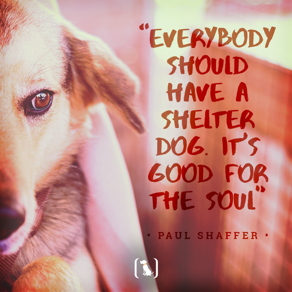 """""""Everybody should have a shelter dog. It's good for the soul"""""""
