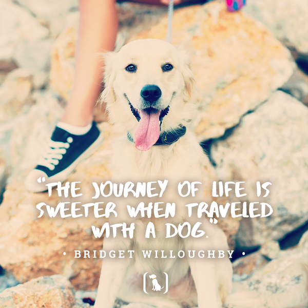 """""""The journey of life is sweeter when traveled with a dog"""""""
