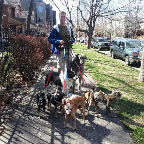 Steve and his Senior Rescue Dogs