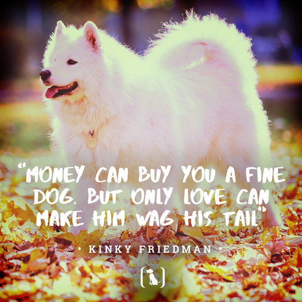 """""""Money can buy you a fine dog. But only love can make him wag his tail"""""""