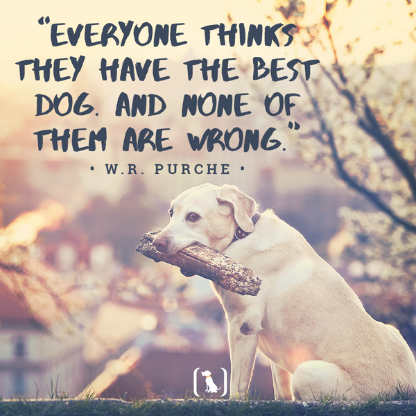 """""""Everyone thinks they have the best dog. And none of them are wrong."""""""