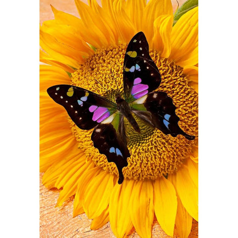Image of BLACK BUTTERFLY ON SUNFLOWER  Diamond Painting Kit
