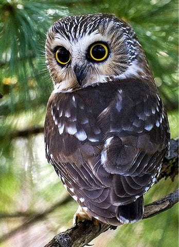 Image of OWL SERIES - Diamond painting Kit