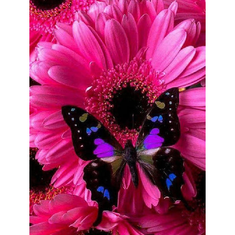 PINK DAISY BUTTERFLY Diamond Painting Kit