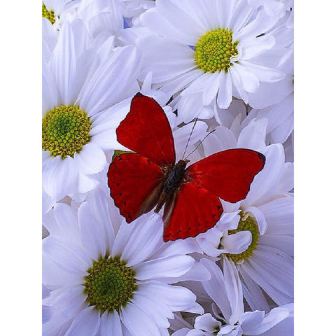 Image of RED BUTTERFLY ON WHITE DAISIES Diamond Painting Kit