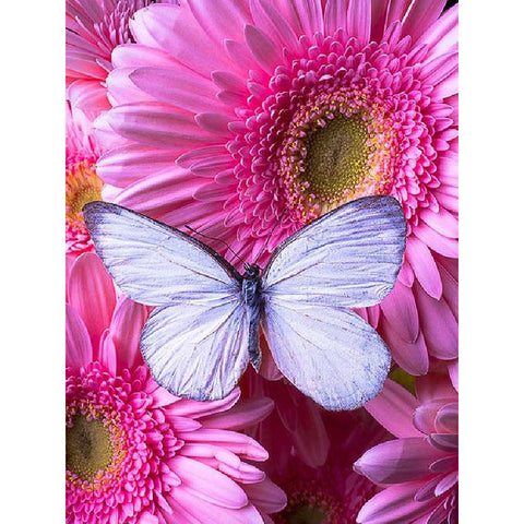 BUTTERFLY ON PINK DAISIES Diamond Painting Kit