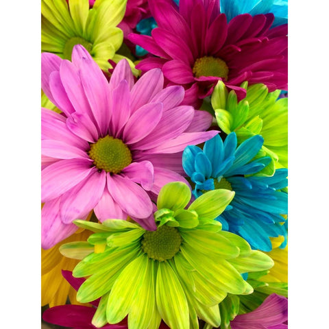 Image of COLORFUL DAISY FLOWERS Diamond Painting Kit