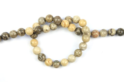 Fossil Coral, 10mm, Round Shape Beads