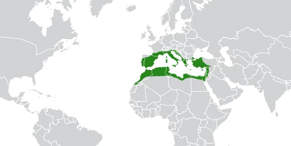 The Mediterranean Basin