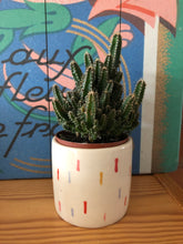 Load image into Gallery viewer, Plant: Cacti Buddy