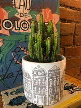 Load image into Gallery viewer, Plant: Column Cacti